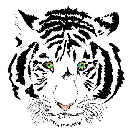 tiger white: tigre bianca testa sketch