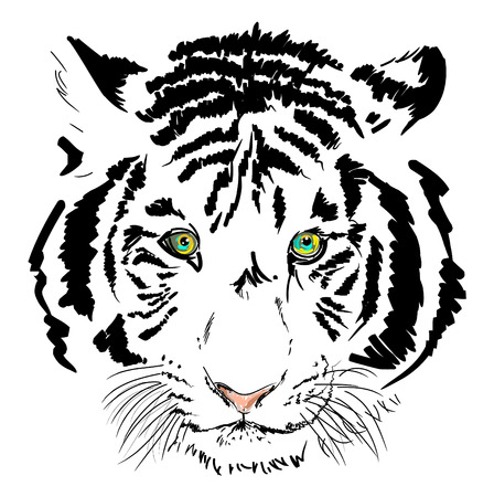 bengal: white tiger head sketch Illustration