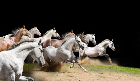people force: purebred horses herd on black Stock Photo