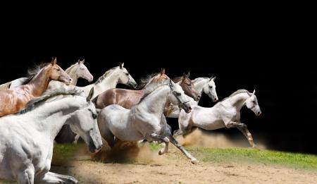 purebred horses herd on black Stock Photo - 5833911