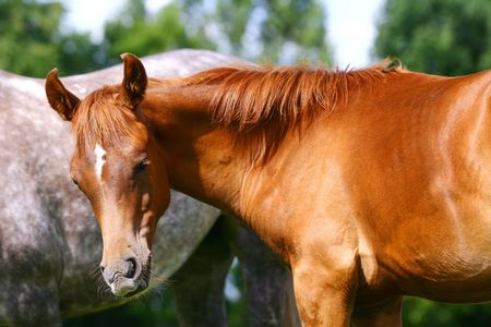 young arab colt Stock Photo - 5949172
