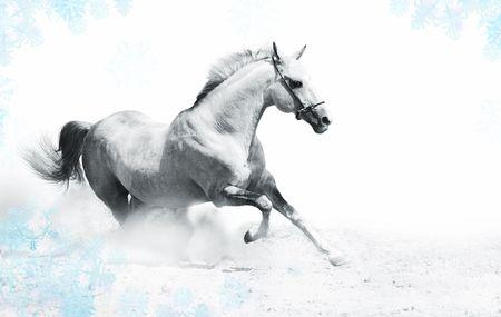 silver-white stallion in snow photo
