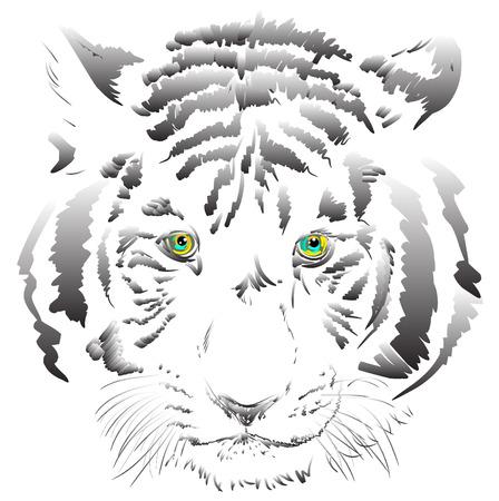 tiger white: tigre bianca vettoriale