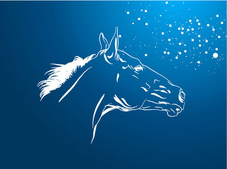 western saddle: horse vector in a night