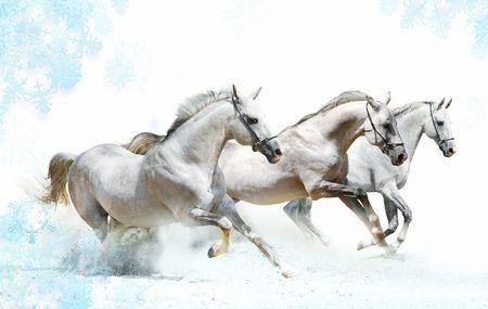 trio of horses in snow photo