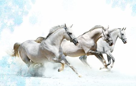 trio of horses in snow