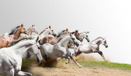 cavallo che salta: mandria isolata on white