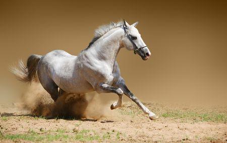 Silver-wit hengst in stof