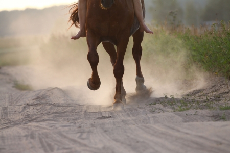 galloping: horse running in dust Stock Photo