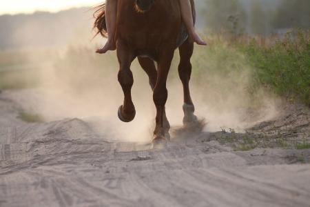 Pferd läuft in Staub
