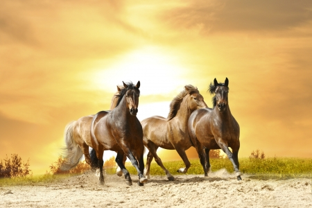 galloping: horses in sunset