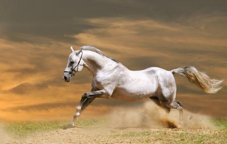 paard in de zons ondergang Stockfoto