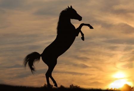 caballos negros: caballo en la puesta de sol