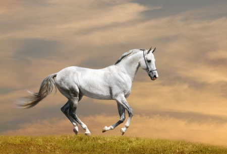 white horse running Archivio Fotografico