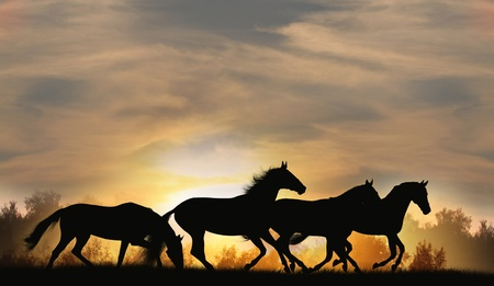 beast ranch: horses silhouettes Stock Photo