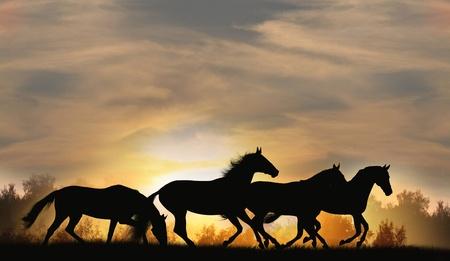 horse: horses silhouettes Stock Photo