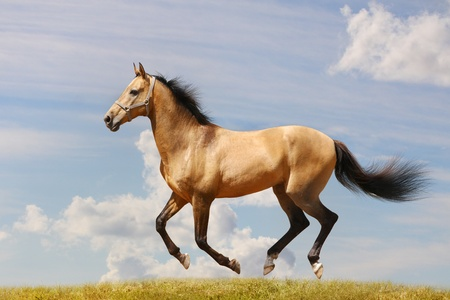 cheval galop