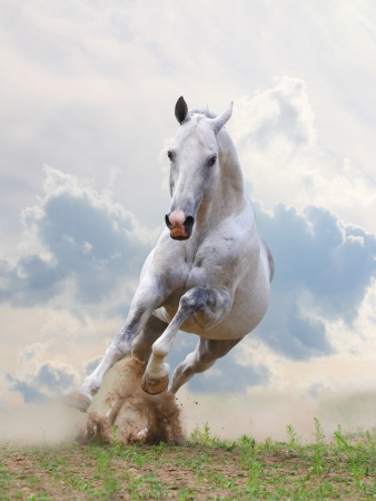 force of nature: white horse