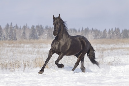black horse Stock Photo - 8578677