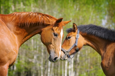 ponies: two horses Stock Photo