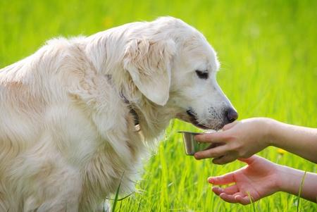 女性摂食犬を手します。 写真素材