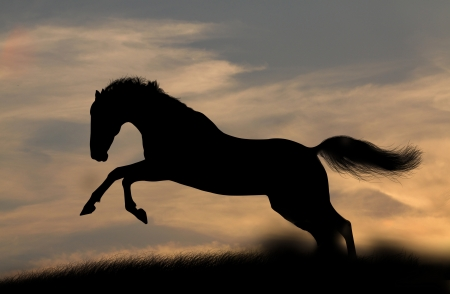 grey horses: horse silhouette in sunset