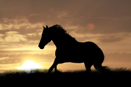 horse in sunset photo