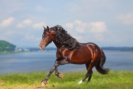 horse near water running photo