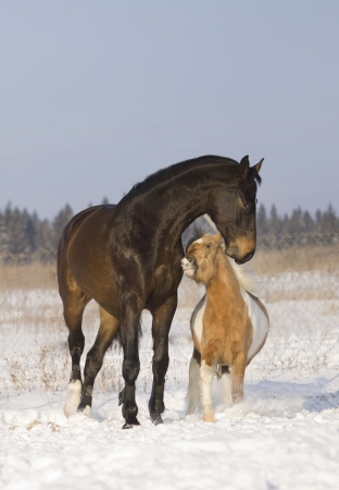 horses playing in snow Stock Photo - 9967300