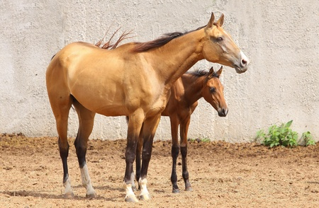 pry: mare and foal