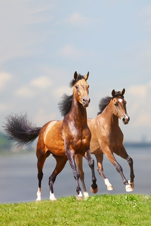 two horses againt water photo