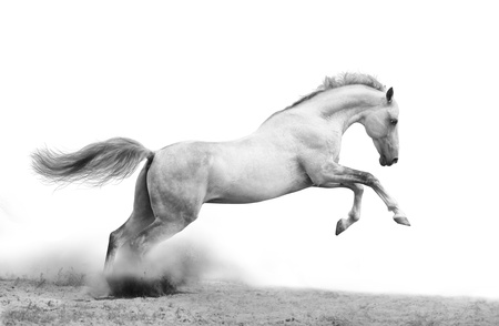 move forward: silver-white stallion on black Stock Photo