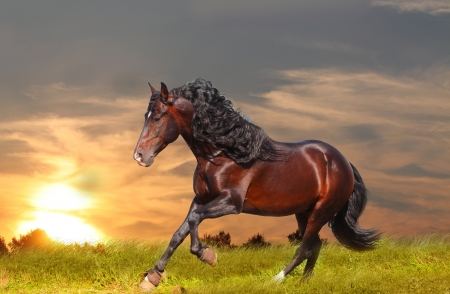caballo en sunset