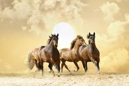 horses in autumn sunset Stock Photo - 10885831