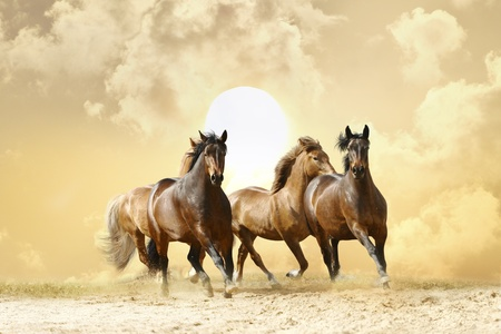 chestnut male: horses in autumn sunset