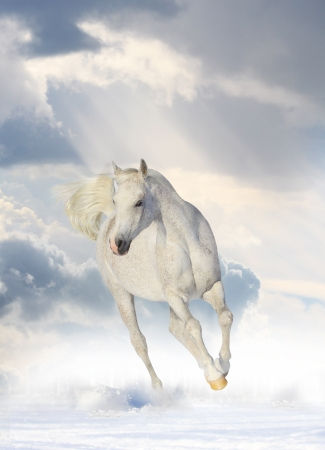 white horse Stock Photo - 11384748