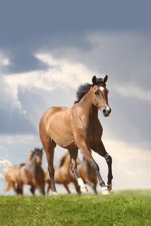 horse chestnut: horse running