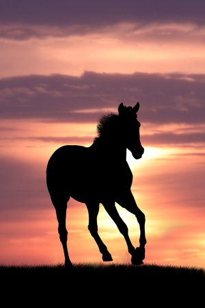 horse in sunrise photo