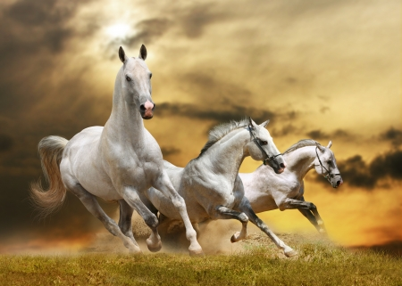 white horses Stock Photo - 12534938