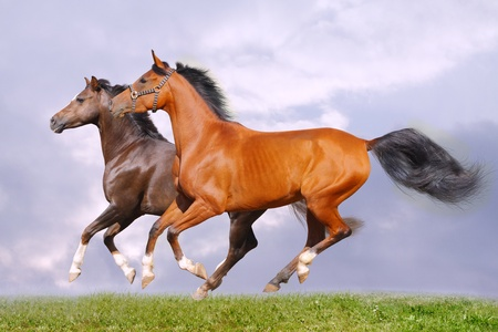 horses in grass