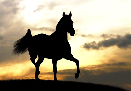 dressage: horse silhouette in sunset