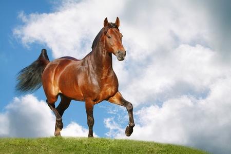 Cheval dans le champ Banque d'images - 12534944