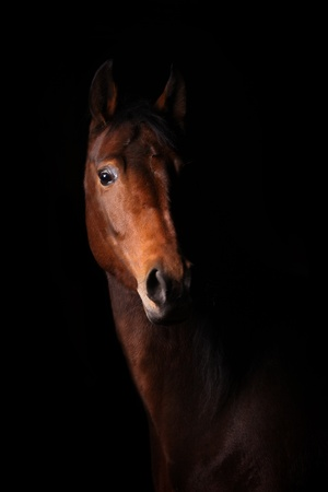 horse in dark photo