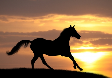 fast horse: horse in sunset