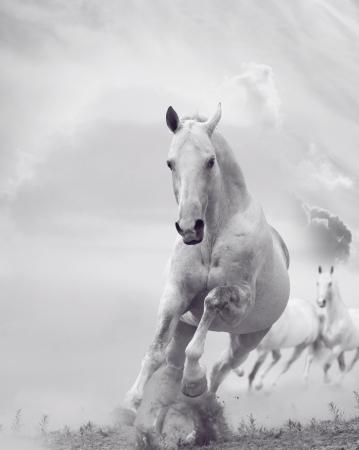 hooves: stalloni bianchi in polvere Archivio Fotografico
