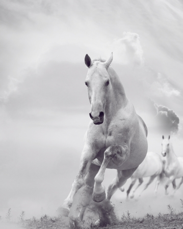 fast horse: white stallions in dust