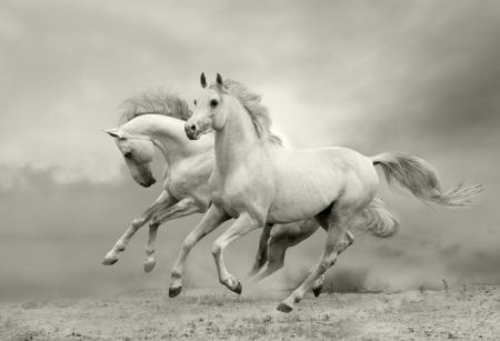 wild horse: horses in summer