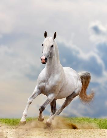 beast ranch: white horse