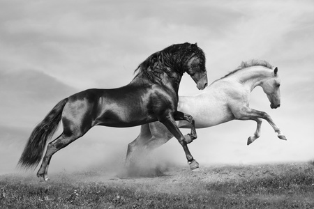 chestnut male: horses in summer