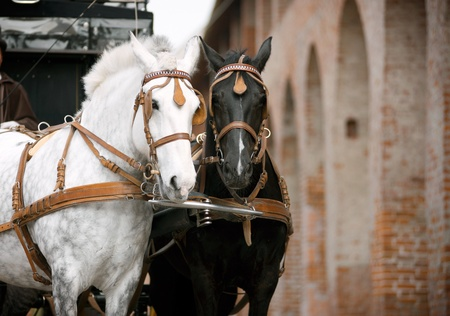 horses in carriage photo